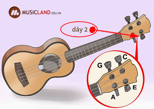 chinh day 2 dan ukulele
